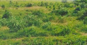 Namanve land