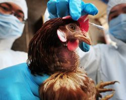 Bird Flu experts sent to Masaka