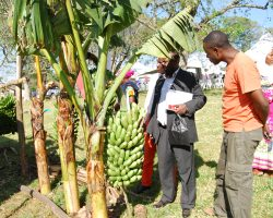 Farmers flock MBAZARDI for Daily Monitor Farm Clinic