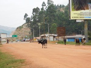 Business slow at Rwanda-Uganda borders despite M7-Kagame pact